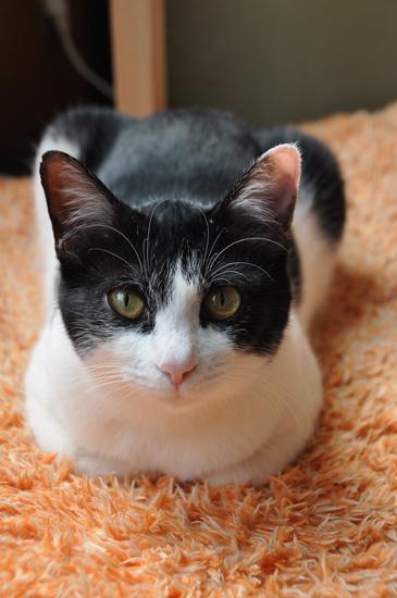 福島で猫シェルター取材中_e0171573_1836769.jpg
