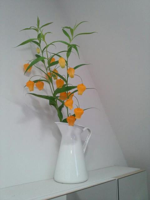 Flowers!_b0195783_10292870.jpg