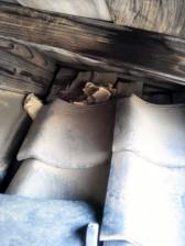 屋根裏にハクビシンが潜入_c0223192_2049870.jpg