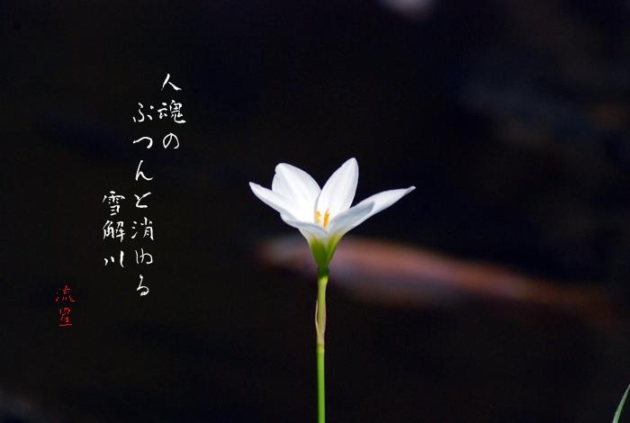 f0053297_11234142.jpg