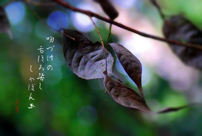 f0053297_1265743.jpg