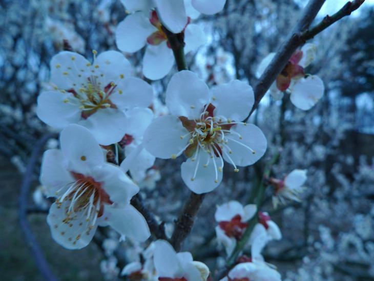 Spring is around the corner!!!! 2012_a0188798_22413148.jpg