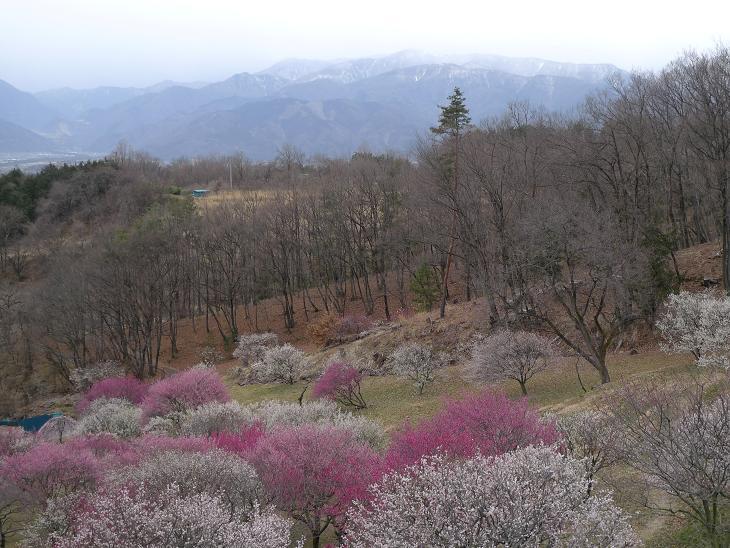 Spring is around the corner!!!! 2012_a0188798_22414449.jpg