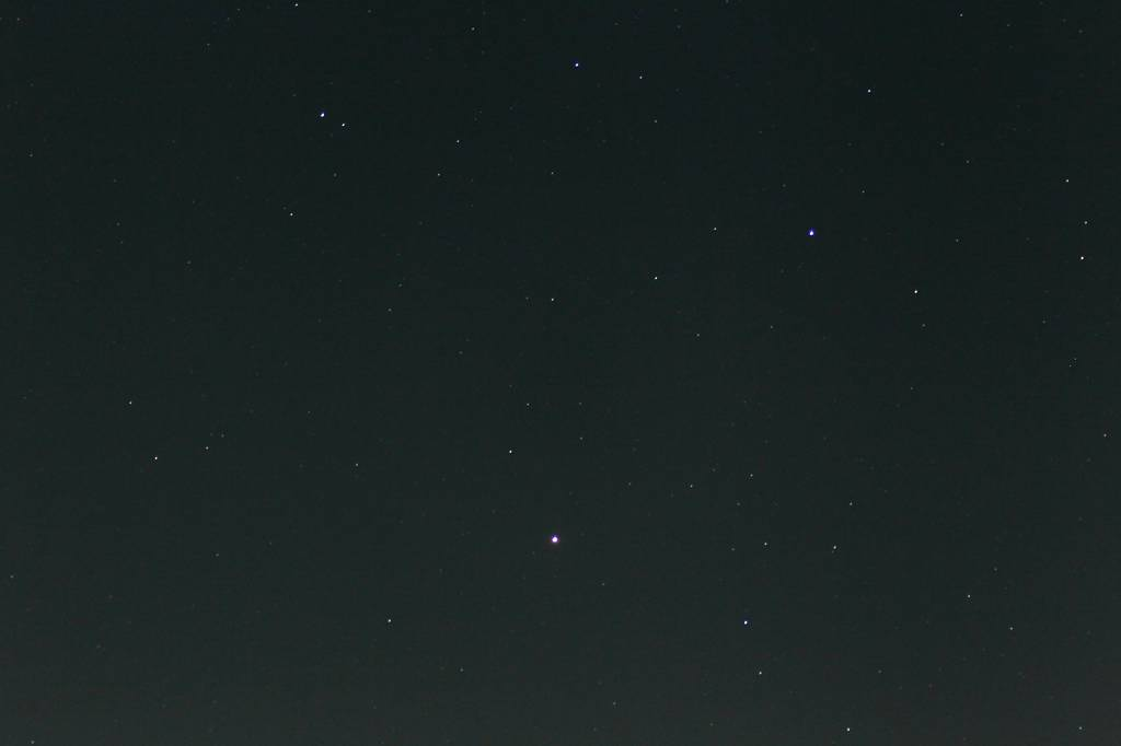 牽制しあうアカハラ&ツグミ/しし座の火星&冬の大三角形_b0024798_1041480.jpg