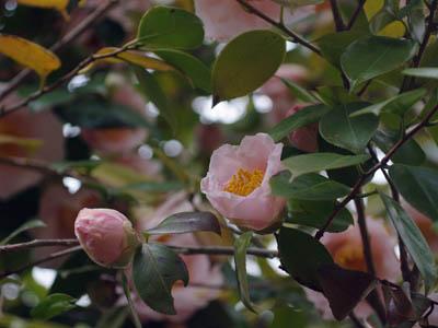 花を写す_c0081499_1114408.jpg