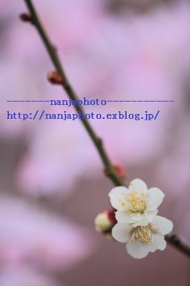 e0268999_3241633.jpg
