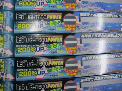 LEDライト大量補充完了_a0193105_22204187.jpg