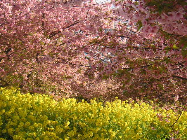海の春、山の春_a0056406_14261017.jpg