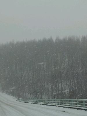 雪です。_a0164408_20414034.jpg