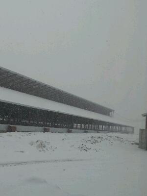 雪です。_a0164408_20421847.jpg