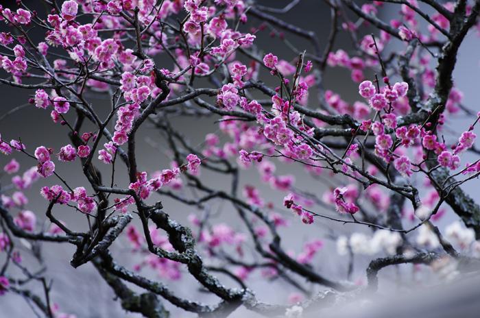 東慶寺の3月 5_b0151409_21515557.jpg