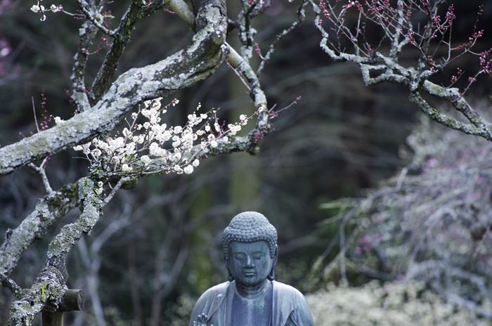 東慶寺の3月 5_b0151409_21533126.jpg
