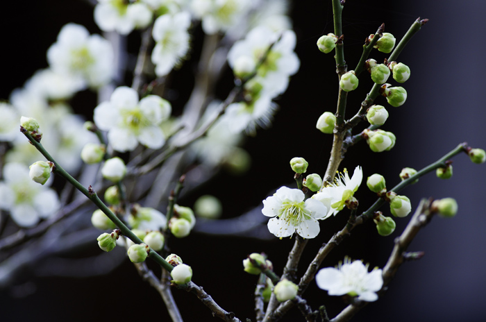 東慶寺の3月 5_b0151409_2153611.jpg