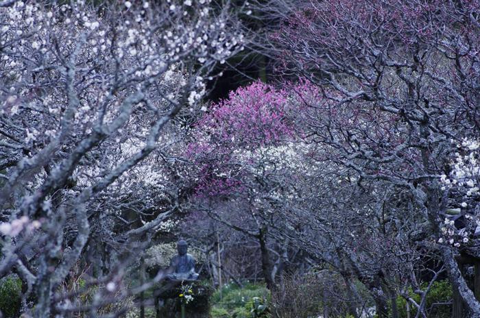 東慶寺の3月 5_b0151409_21551953.jpg