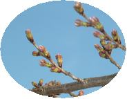 3月30日(金)_b0121719_16545456.jpg