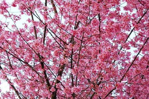 東京スケッチ  自由ヶ丘あたり_c0107129_1251410.jpg