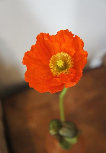 ありがとうの花!_e0214436_21544219.jpg