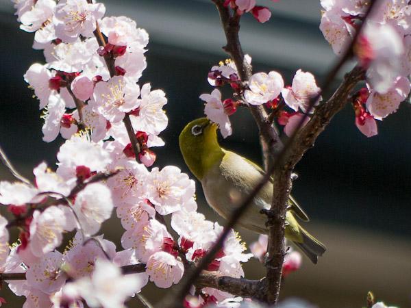 鳥って難しいじゃん・・・_b0229648_03119100.jpg