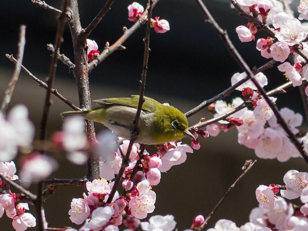 鳥って難しいじゃん・・・_b0229648_0312334.jpg