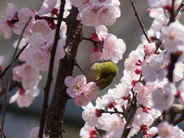 鳥って難しいじゃん・・・_b0229648_0312776.jpg