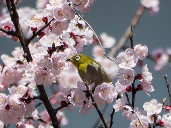 鳥って難しいじゃん・・・_b0229648_0313047.jpg
