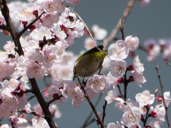 鳥って難しいじゃん・・・_b0229648_0313360.jpg