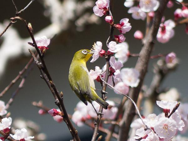 鳥って難しいじゃん・・・_b0229648_0383971.jpg