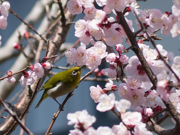 鳥って難しいじゃん・・・_b0229648_0384373.jpg