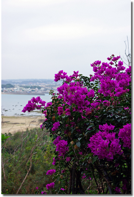 沖縄一日目 山の茶屋・楽水_f0012154_21522958.jpg