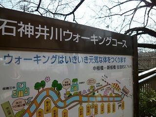 SAKURA 「開花~♪」 この季節の散歩道_a0165160_16505211.jpg