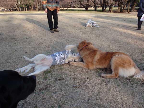 桜の蕾♪〜_c0110361_1617563.jpg