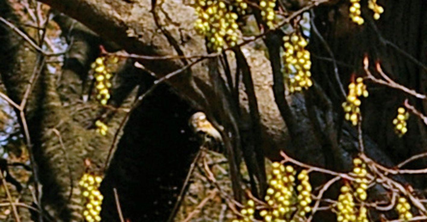 里山ってなんだ!第22回「生物の多様性」10 コゲラ_c0014967_8313576.jpg