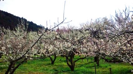 梅の花_e0128485_1737415.jpg