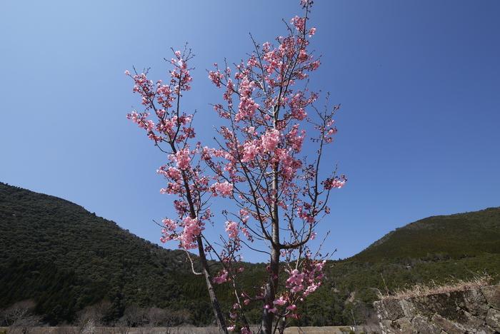 桜咲く告別式_e0214805_7414554.jpg