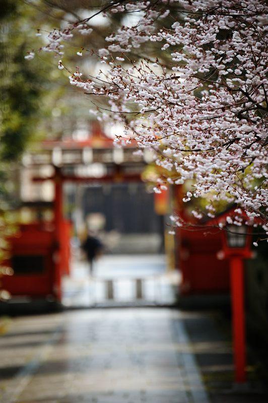 車折神社の河津桜 其の二_f0032011_18473845.jpg