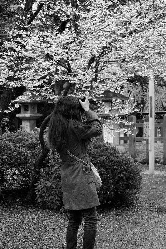 車折神社の河津桜 其の二_f0032011_18475879.jpg