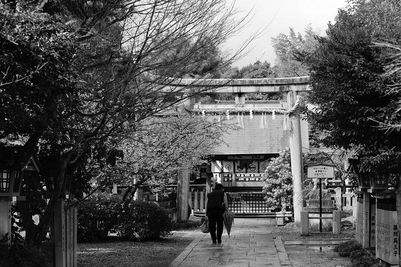 車折神社の河津桜 其の二_f0032011_18513091.jpg