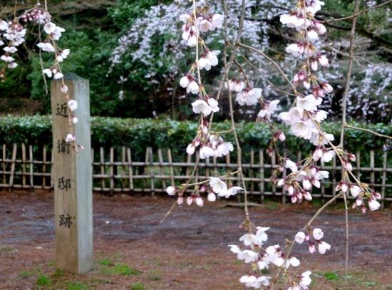京都御苑 糸しだれ桜_e0048413_2175993.jpg