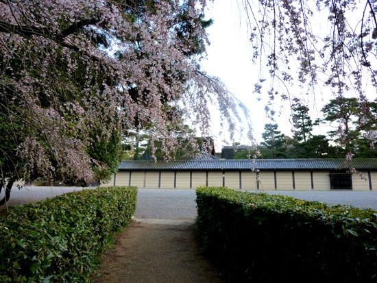 京都御苑 糸しだれ桜_e0048413_2184657.jpg