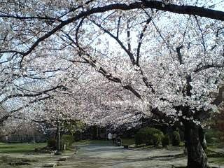 今日の舞鶴公園_e0149436_22432275.jpg