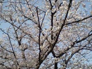 今日の舞鶴公園_e0149436_2244868.jpg