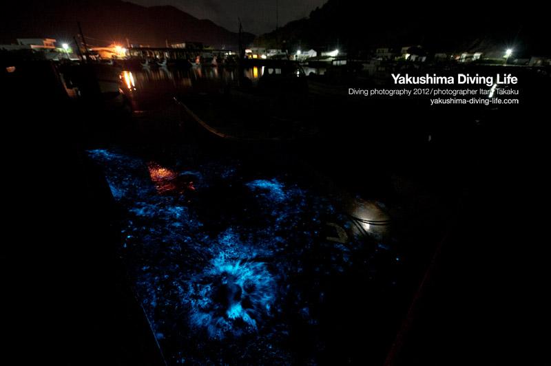 夜光虫が美しく煌めく夜_b0186442_1921558.jpg