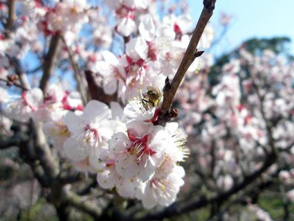 香川の旅 3_a0099744_10175788.jpg
