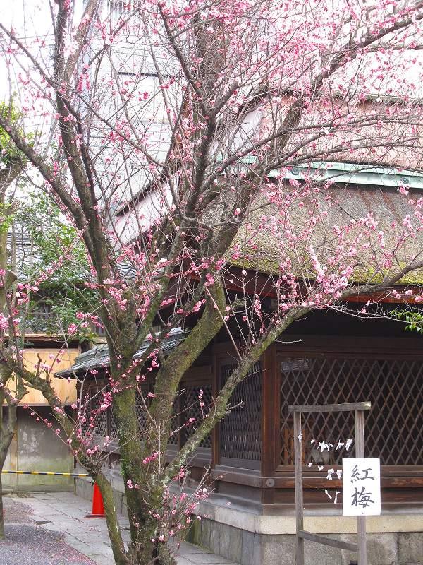 京都寺町通りの歴史散歩_e0237645_9225750.jpg