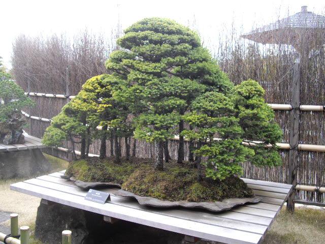 大宮の盆栽美術館です。_d0116059_21173120.jpg