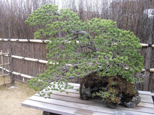 大宮の盆栽美術館です。_d0116059_21174980.jpg
