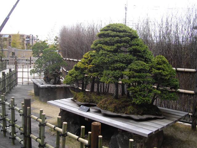 大宮の盆栽美術館です。_d0116059_2118747.jpg