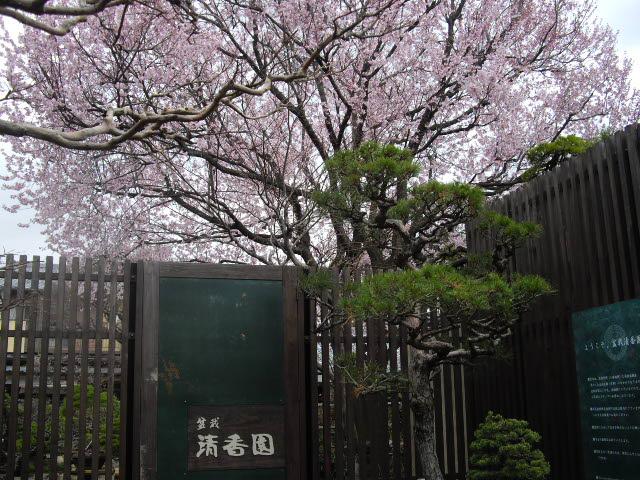 大宮の盆栽美術館です。_d0116059_21261717.jpg