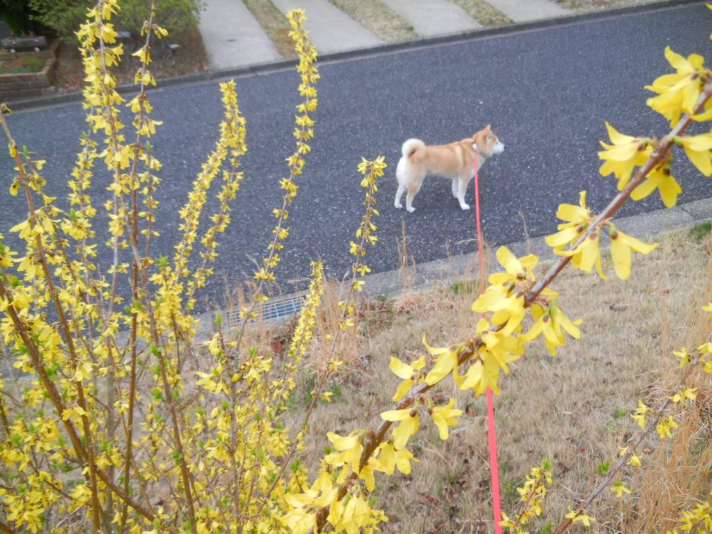 2012年3月31日(土)寝不足と突風と悪天候!_f0060461_1019098.jpg