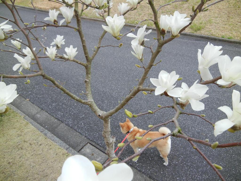 2012年3月31日(土)寝不足と突風と悪天候!_f0060461_10194918.jpg